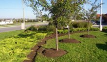Lanscaping Services Canada